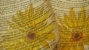 pergaminos y textos iluminados